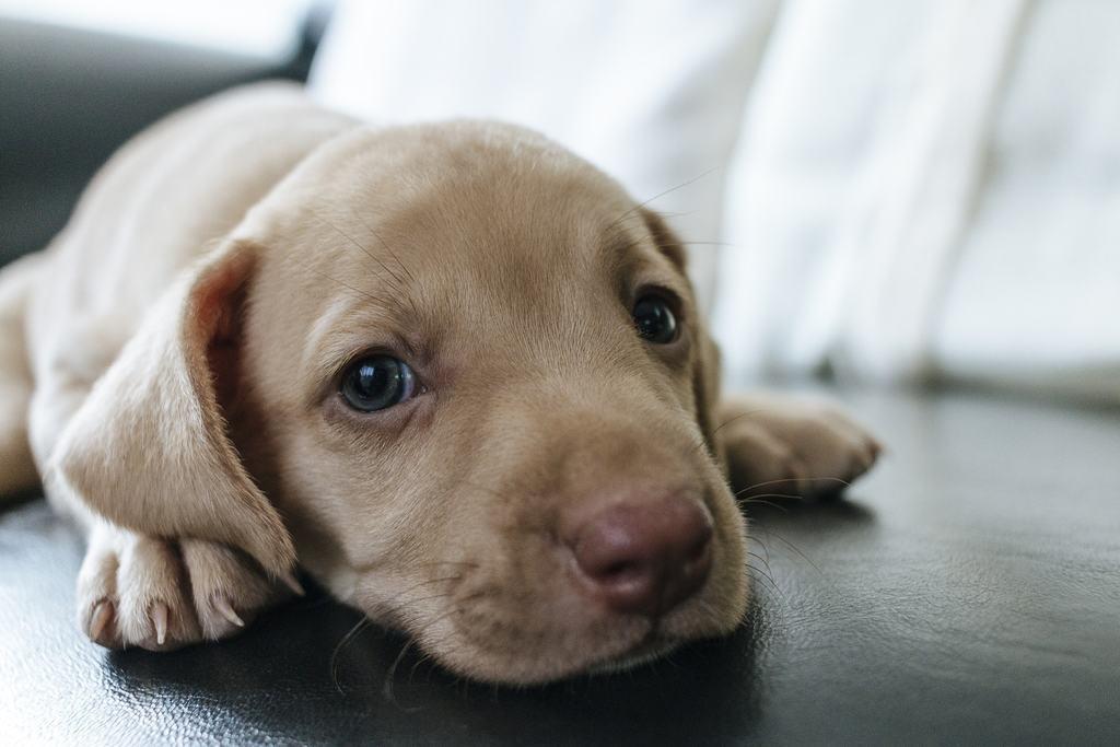 Questo è un cucciolo di cane