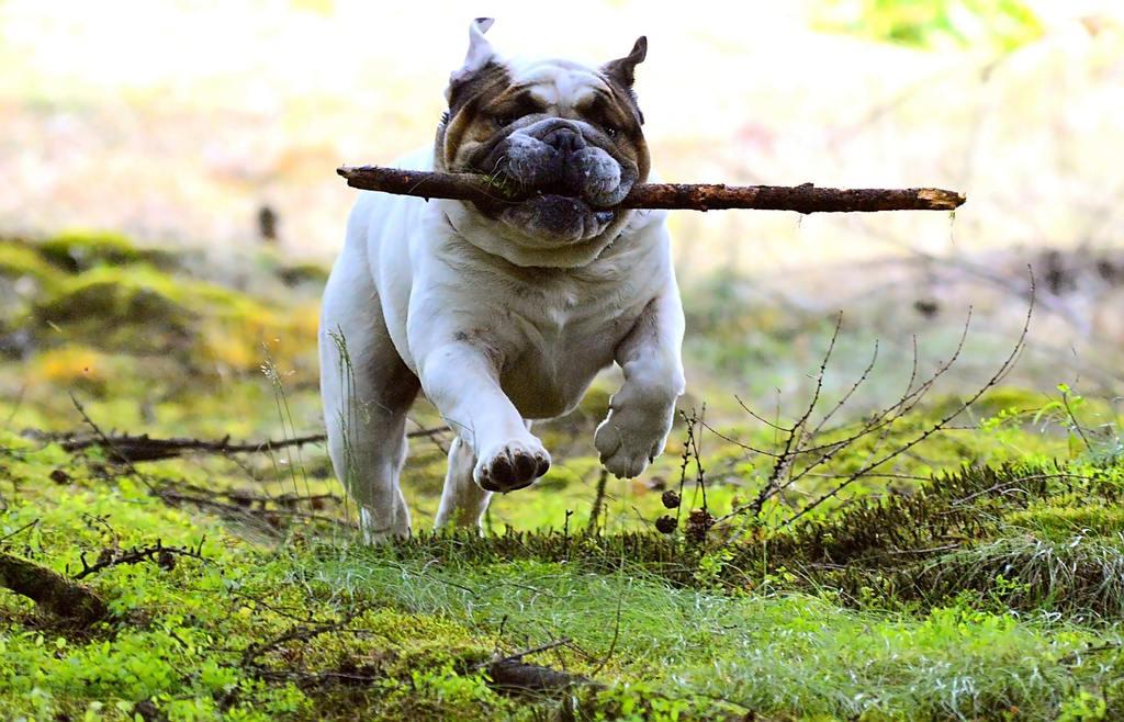 Questo è un cane che fai esercizio fisico