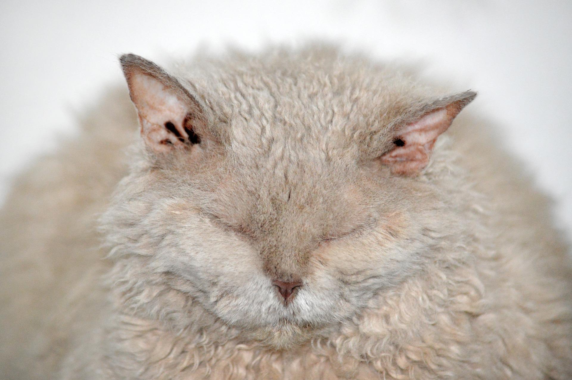 obesità nel gatto