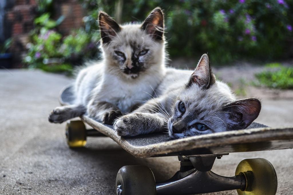 gatto maschio o femmina