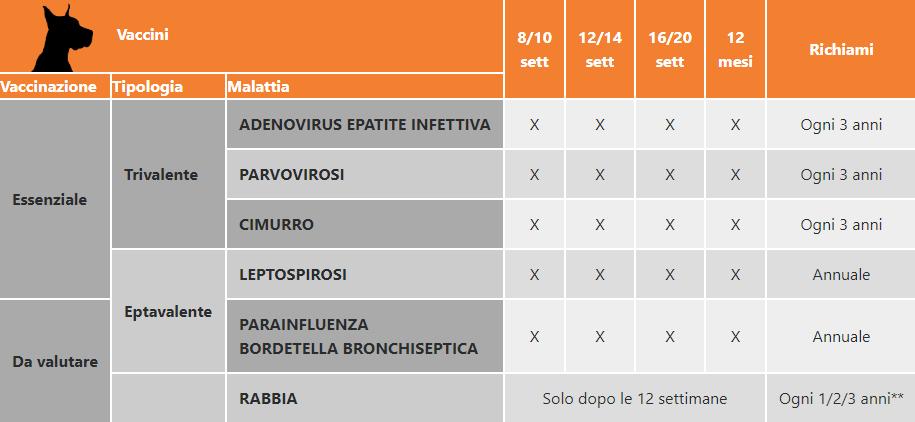 Calendario Vaccinale Italia.Di Quali Vaccini Ha Davvero Bisogno Il Tuo Cane Il Blog