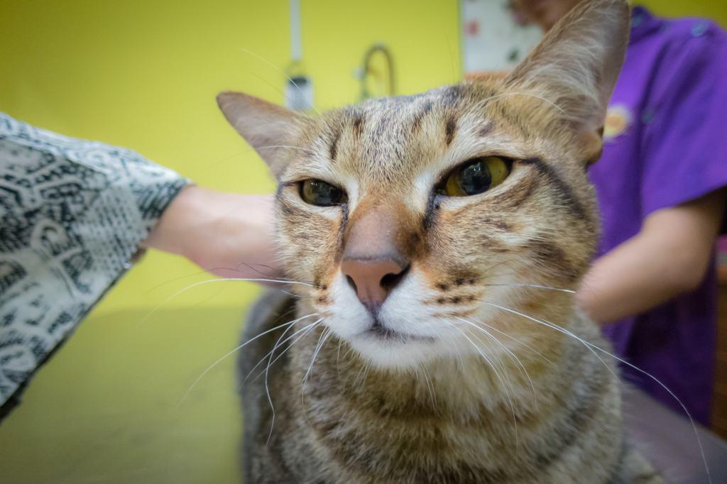 vaccini gatto