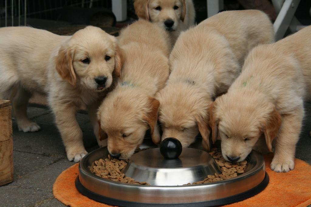 Alimentazione Del Cane Una Guida Per Una Dieta Completa