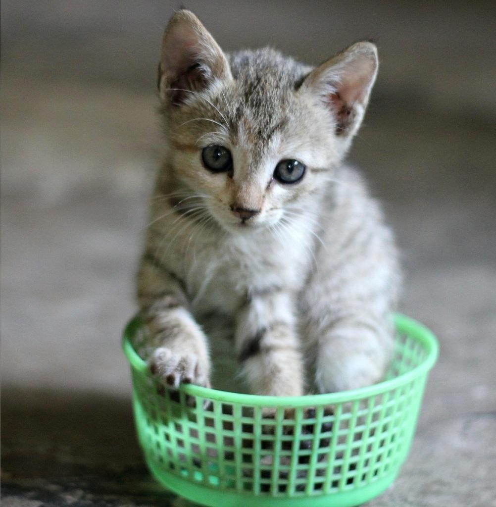 prendere un gatto