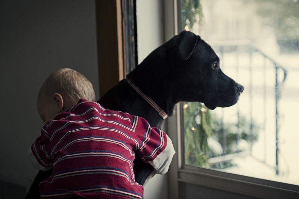 quando muore un cane