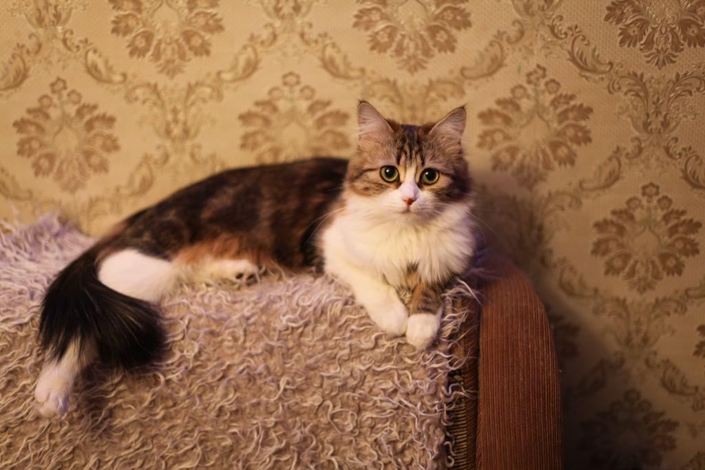 Adottare un gatto cosa bisogna fare prima di portare il - Come fare il bagno al gatto ...