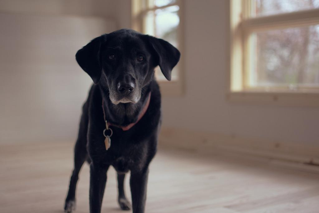 cane incontinente
