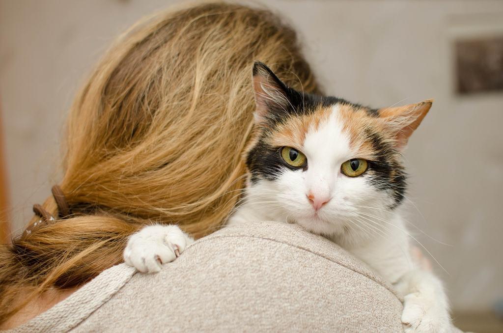 eutanasia gatto