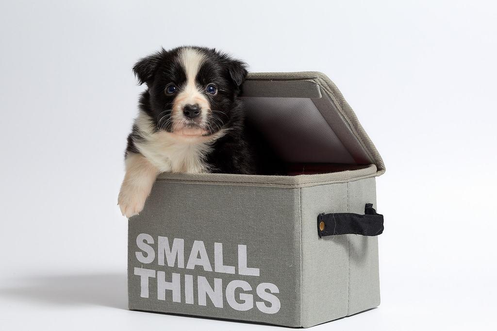 cagnolini piccolissima taglia