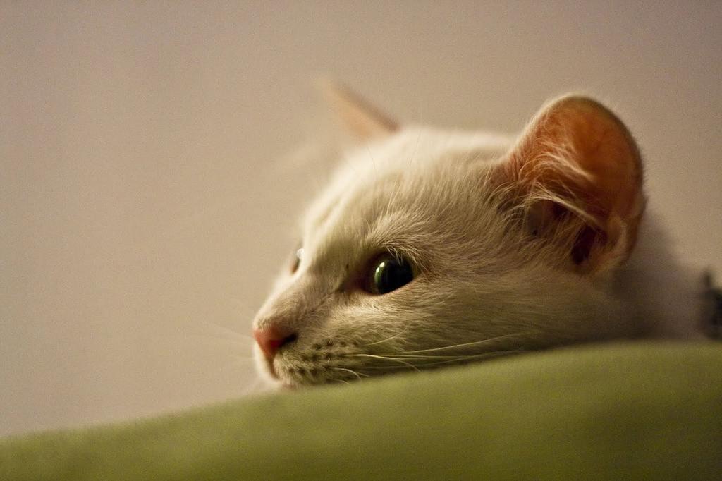 gatto vomita giallo