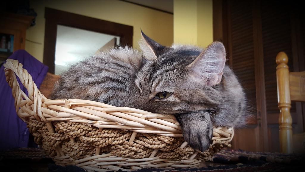 gatto sbava