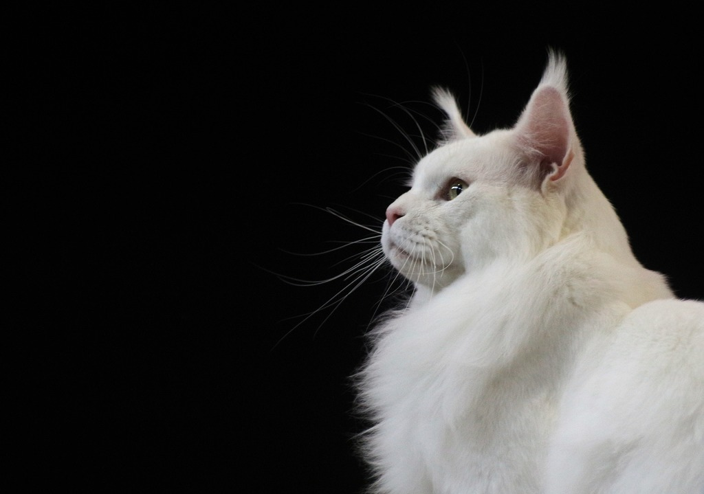 alopecia gatto
