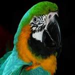 veterinario uccelli milano