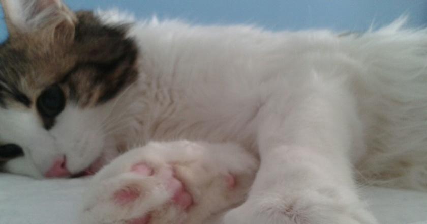 sterilizzazioni castrazione cane e gatto milano