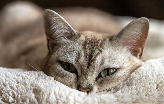 rossi occhi gatto