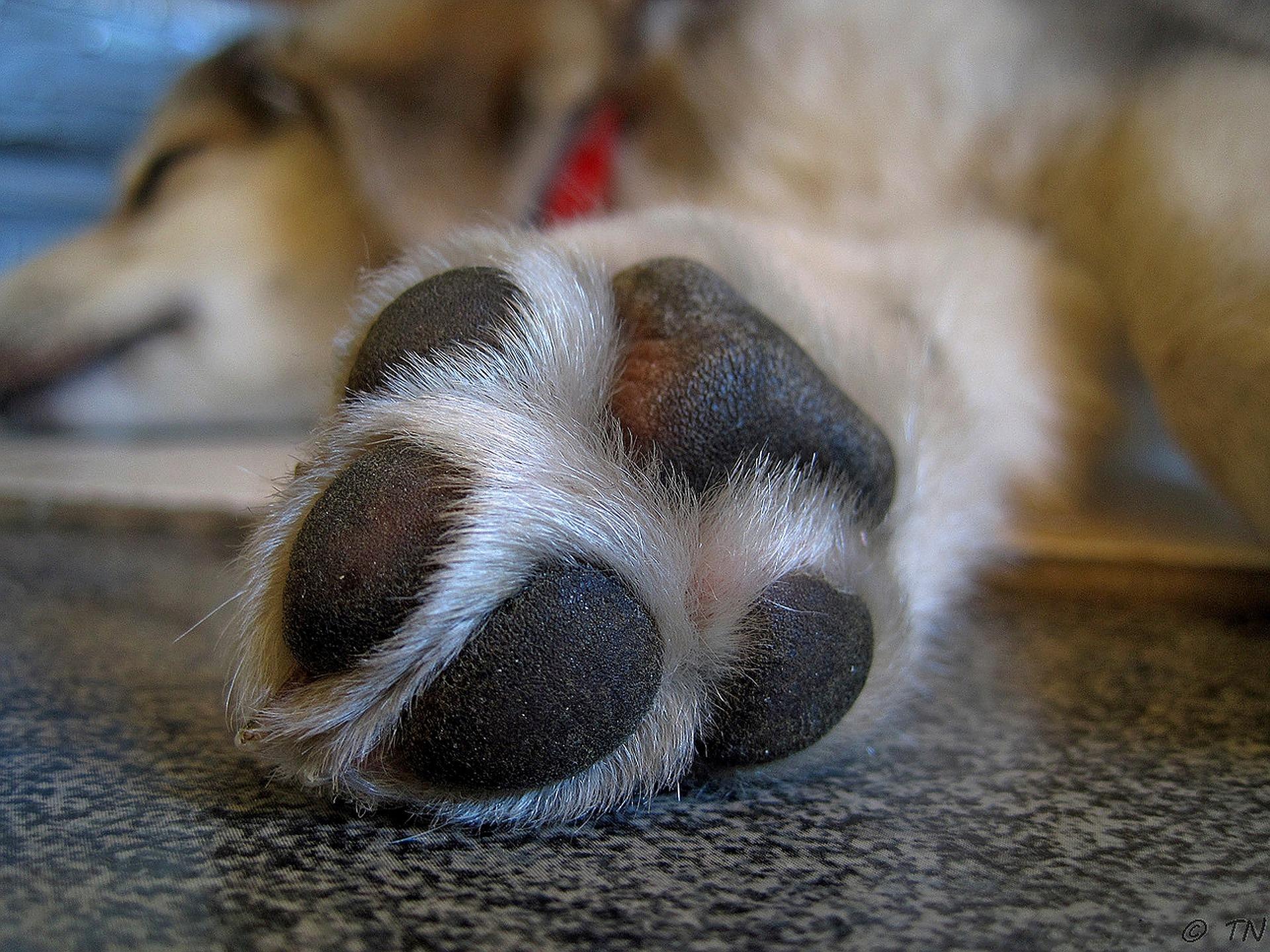 Coronavirus e animali: come disinfettare le zampe del cane