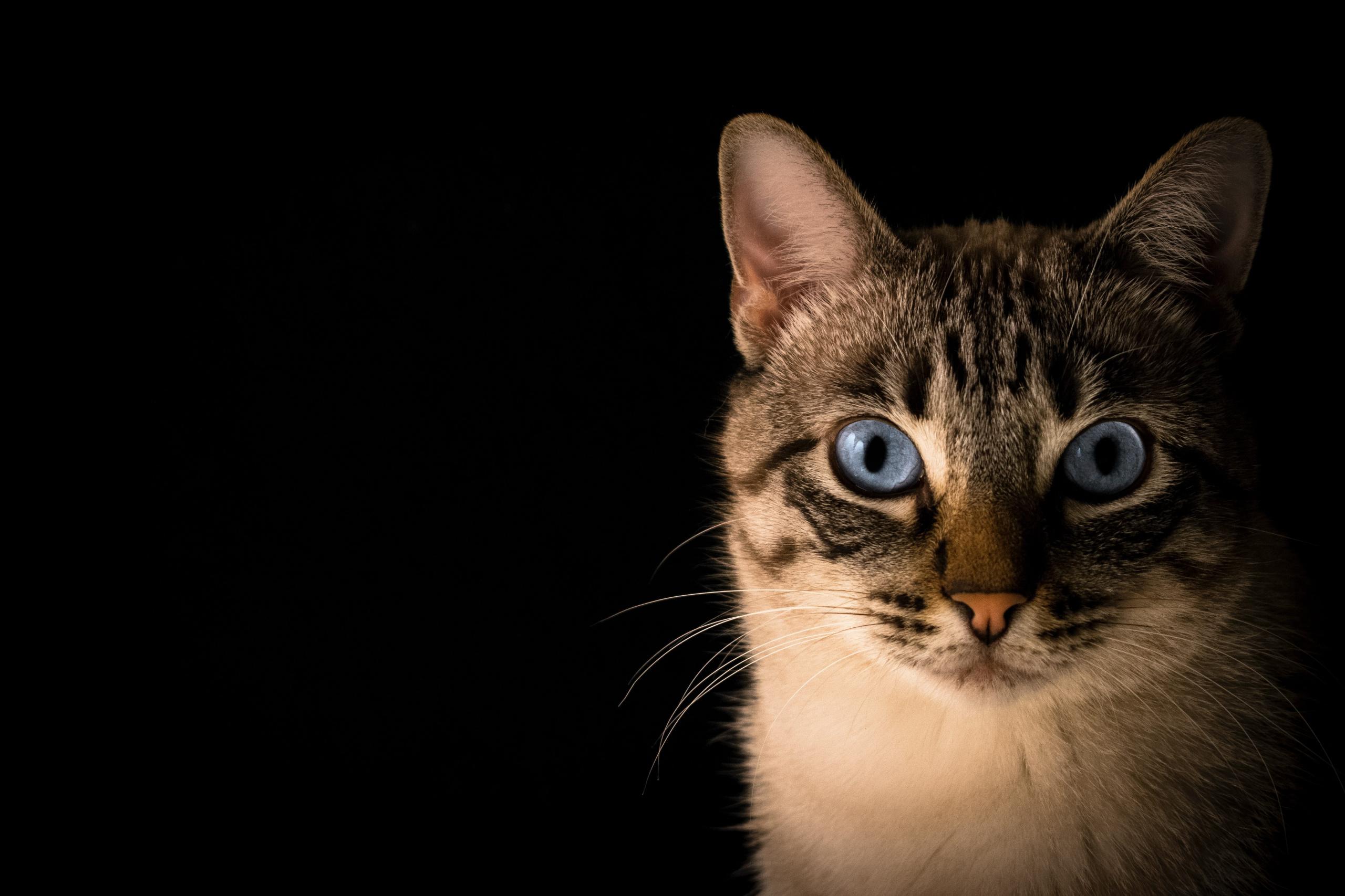 tubercolosi gatto
