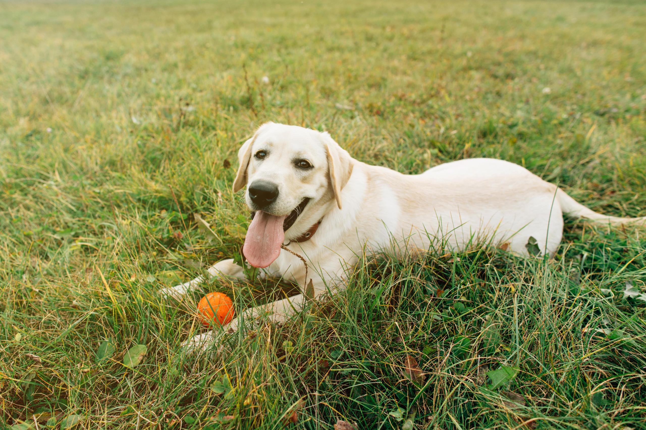 i cani possono mangiare le arance