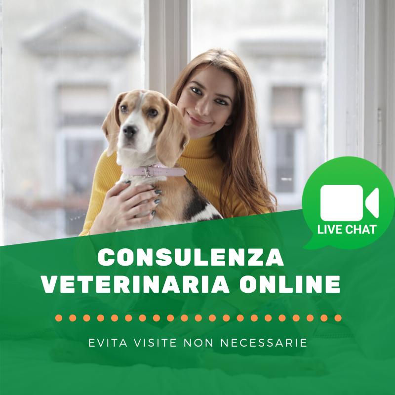 Consulenza veterinaria online
