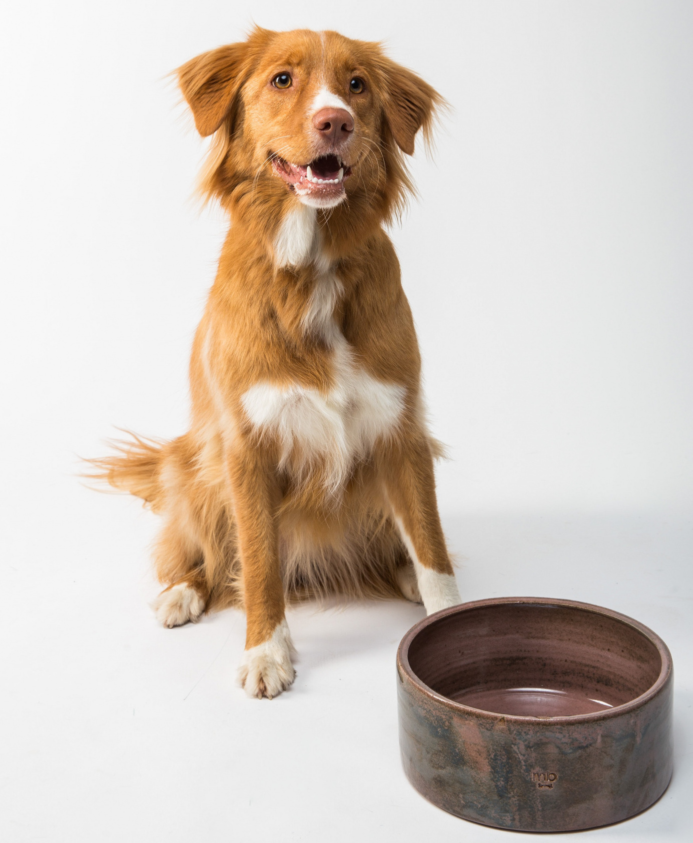 il cane può mangiare l'ananas