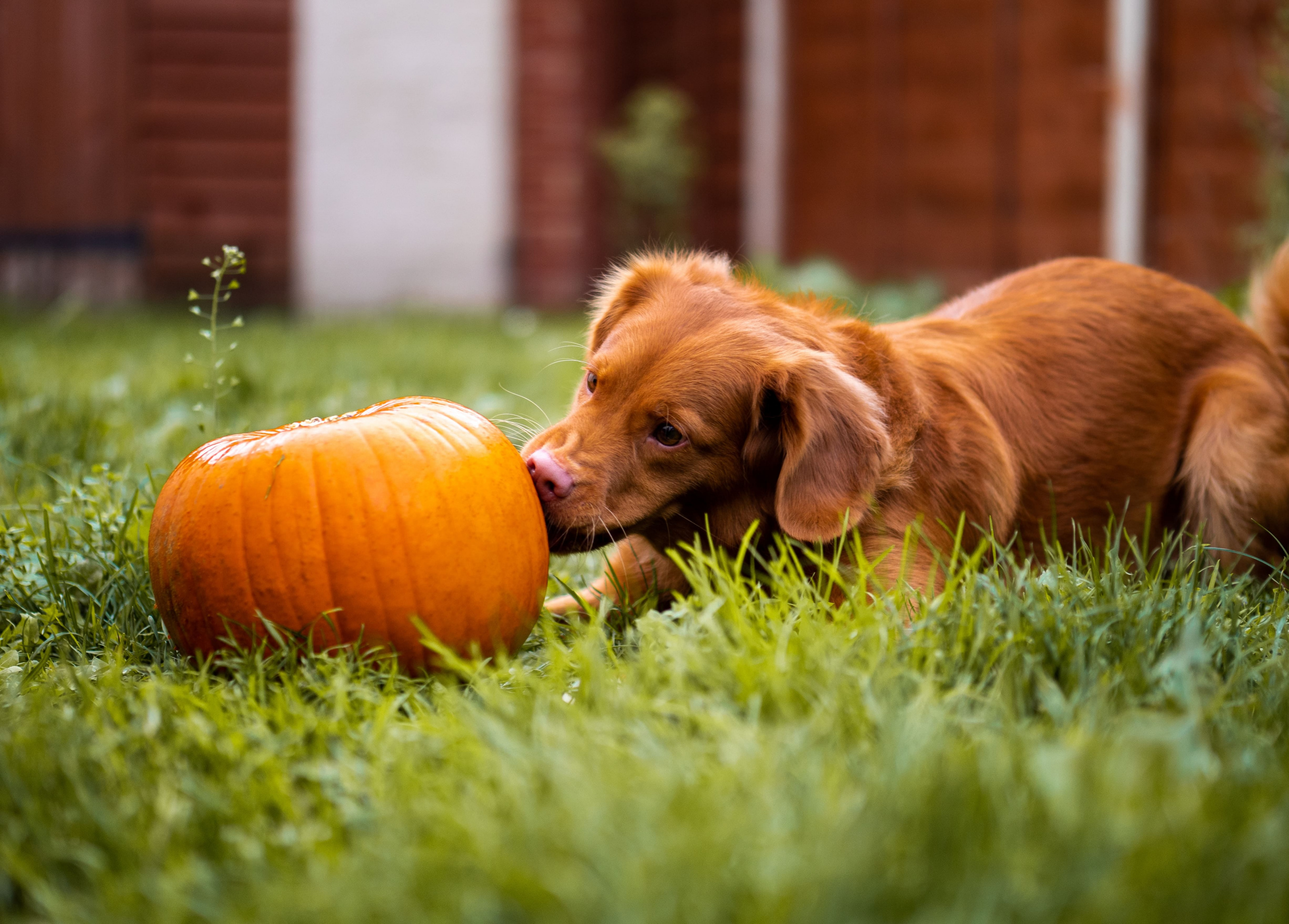 i cani possono mangiare le verdure