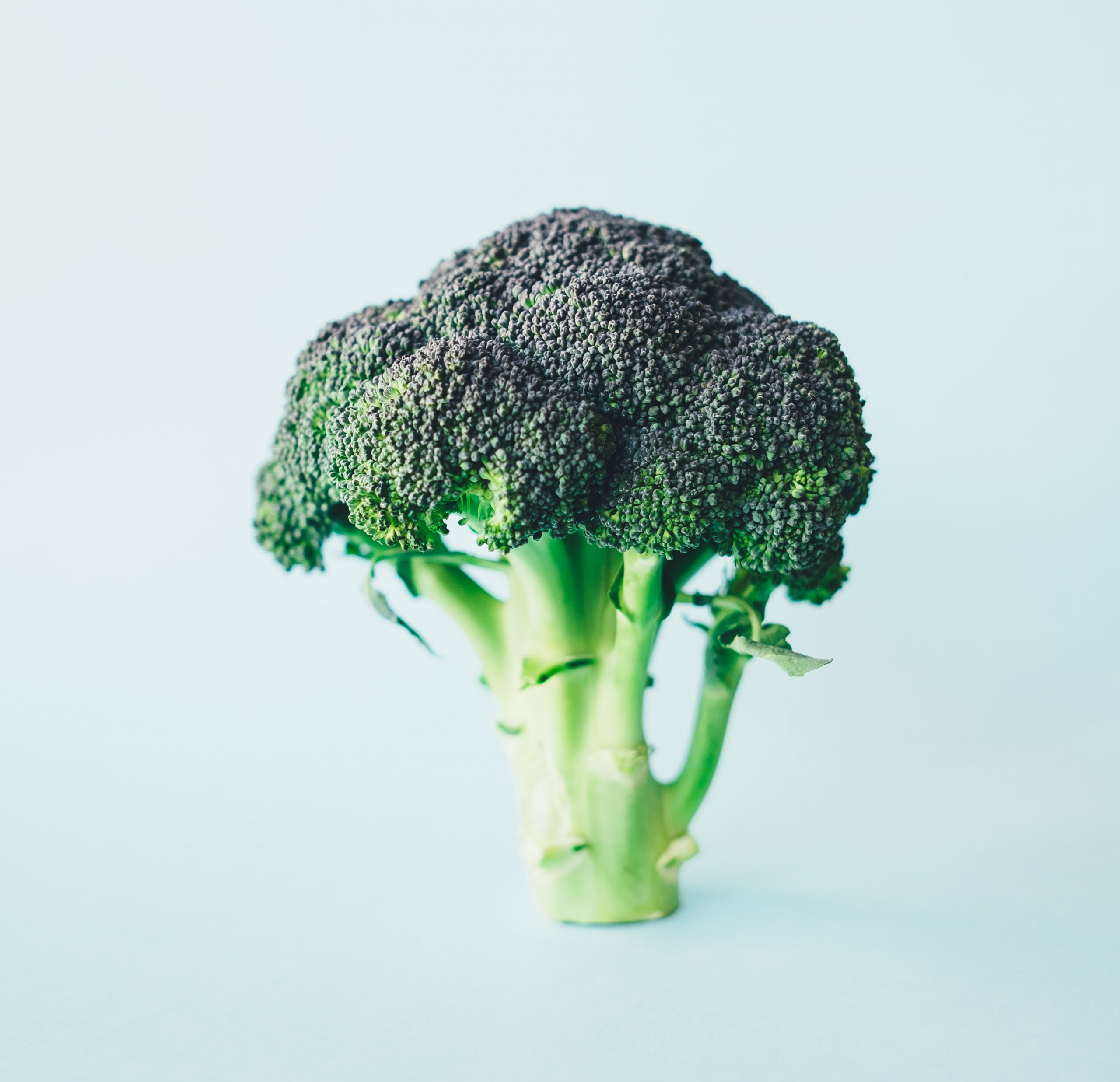 i cani possono mangiare i broccoli