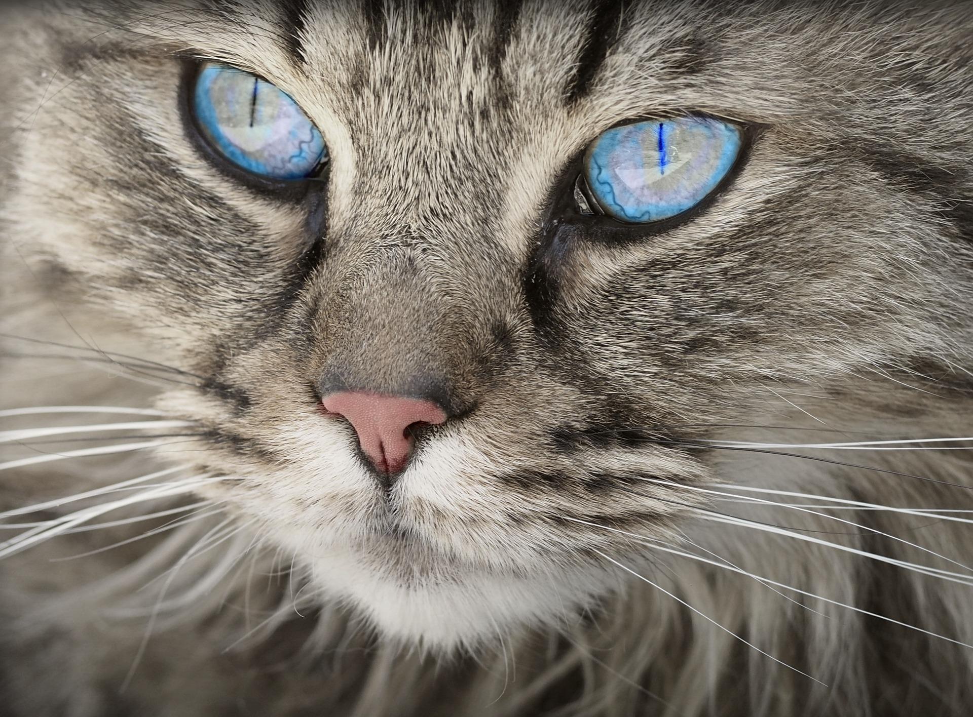 piometra nel gatto