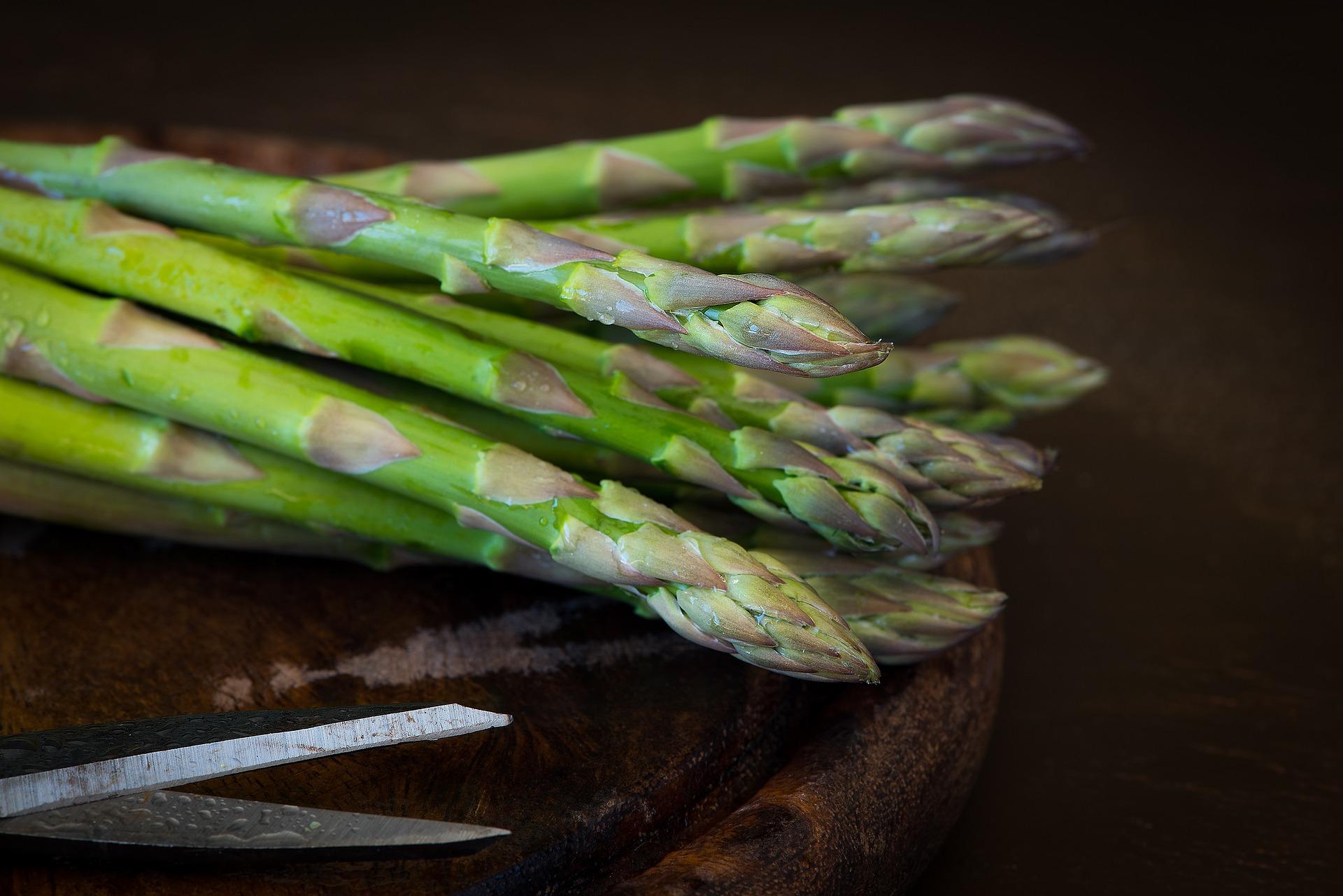 i cani possono mangiare gli asparagi